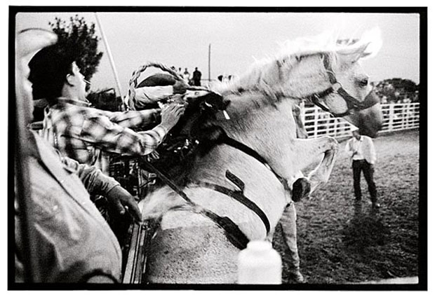 Bumpy ride: rodeo, Monroe County Fairgrounds, Albia, 2004. Danny Wilcox Frazier