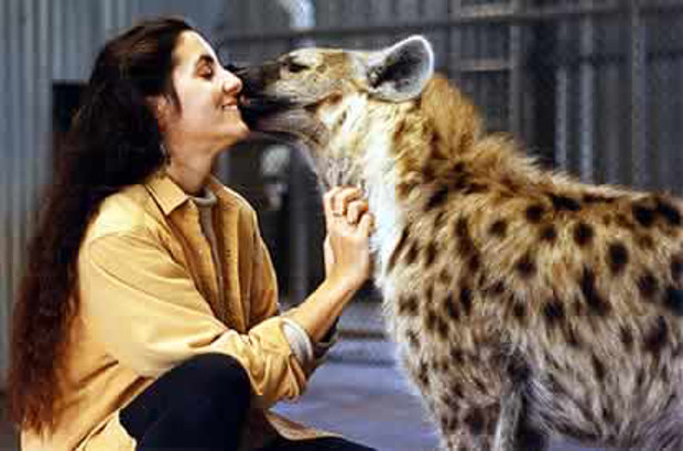 Mutual admiration: spotted hyena Phoenix, whom Drea hand-raised, gives her a nuzzle bonding with hyenas. Kathy Moorhouse.