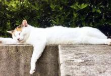 Picture of Peaches the cat, relaxing on Duke University campus